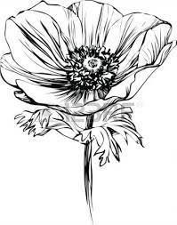 Black And White Picture Poppy Flower