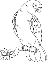 Nest Coloring Page Bird Nest Coloring Page Baby Pages Drawing
