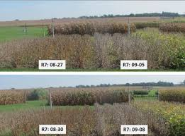Soybean Growth Stages Cropwatch