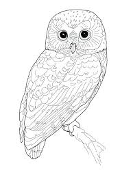 Good Adult Bird Coloring Pages Or Printable Bird Coloring Pages Me
