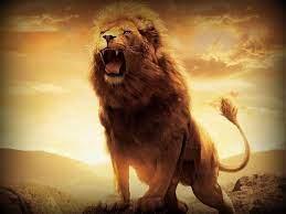 Lion fire lion wallpaper hd for desktop ...