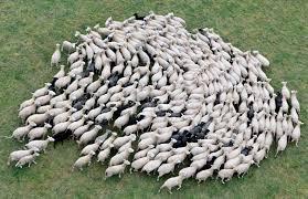 Resultado de imagem para manadas