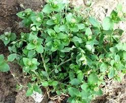 garden mats. Weed Garden Mats