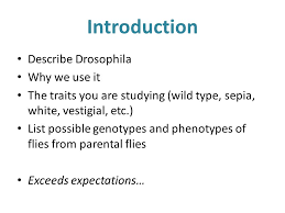 fruit fly lab report basics completed individually everyone s  5 introduction describe drosophila why we use it the traits you are studying wild type sepia white vestigial etc list possible genotypes and