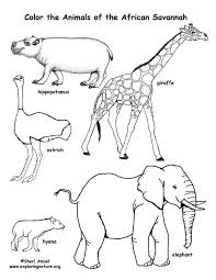 Small Picture Savanna African Animals Coloring Page