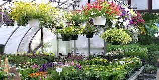 hanging garden ideas indoor vertical wall garden ideas