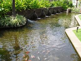 Pond Design Elegant Backyard Pond Fish And Cute Fish Also Natural Flower
