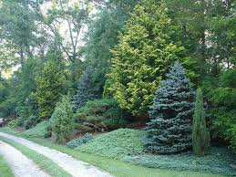 Small Picture Best 20 Evergreen trees landscaping ideas on Pinterest