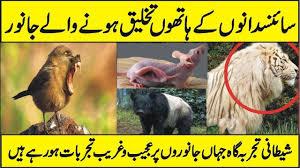 Transgenic Animals What Is Transgenic Animals And Genetic Engineering In Urdu