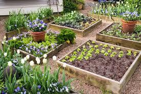 flowers growing in raised garden beds