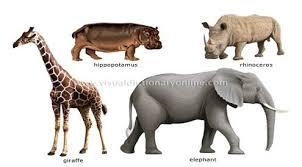 Реферат Млекопитающие животные ru Реферат Млекопитающие животные
