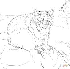 Small Picture Raccoons coloring pages Free Coloring Pages