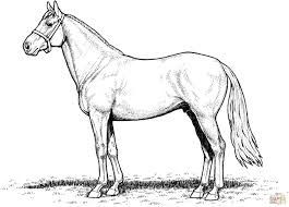 Coloring Horse New Realistic Horse Coloring Pages Inspirationa