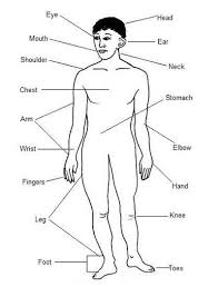 Image result for parts of your body