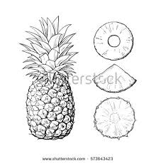 pineapple drawing. whole pineapple and three types of slices - round peeled, unpeeled, wedge, sketch drawing c