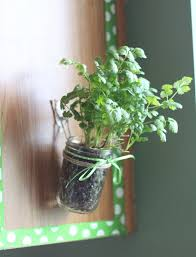 Hanging Kitchen Herb Garden in Mason Jars with Command Hooks