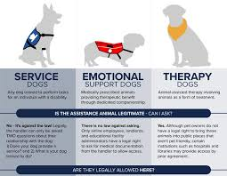 Emotional support animal real Therapy Click Here To See The Full Infographic Orvis News Infographic Is That Real Service Dog Orvis News