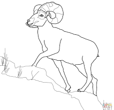 Small Picture Bighorn Sheep coloring page Free Printable Coloring Pages