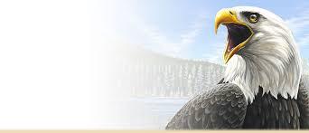 Bald Eagle Age Chart Bald Eagle Facts Information And Photos