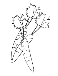 Small Picture Download Coloring Pages Carrot Coloring Page Carrot Outline