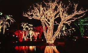 Ask Jason What Are The Best Christmas Lights For Outdoor