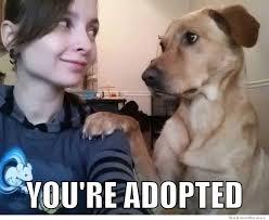 Best Of The Brutally Honest Dog – Meme | WeKnowMemes via Relatably.com