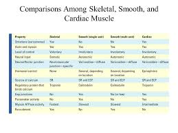 Sioboasan Blog Archive Compare Skeletal And Smooth