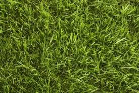 Identify Your Grass Type