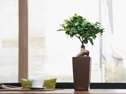 office bonsai. Mini Bonsai Office