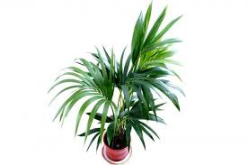 best large indoor plants for low light