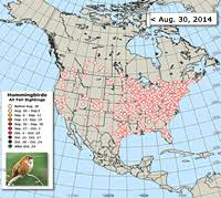 2017 Hummingbird Migration Chart Ruby Throated Hummingbird Migration Comparative Maps