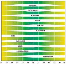 Cannabis Ph Chart Ph Deficiencies 5dollarbudclub