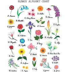 Flower Species Chart Different Types Of Flowers And Their Names Referlocal Co