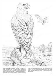 nav birds of prey coloring book main photo cover nav