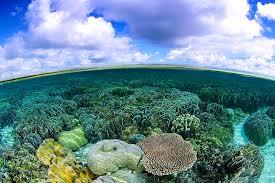 winners gallery photo essay coral reefs finalist