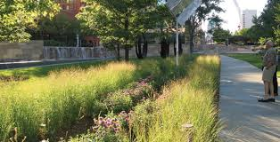 Small Picture Rain Gardens Rain Architects and Landscaping
