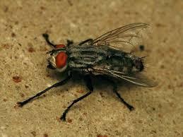 House Bugs In Florida Ceshirek Info