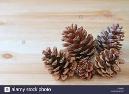 Close Up Of Many Natural Dry Pine Cones In Different Size On