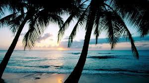 palm trees tumblr vertical. 1920x1080 Ocean Sunset Palm Trees Wallpapers | HD Desktop Tumblr Vertical P