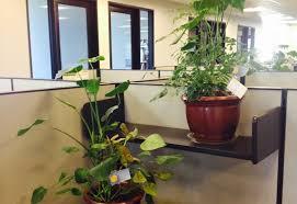 office greenery. Perfect Greenery OfficeGreenery1c2 And Office Greenery