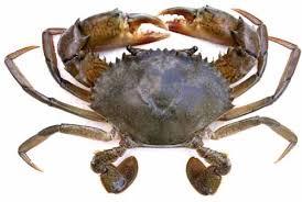 Crab Species Chart Mud Crab Farming Information Guide Modern Farming Methods