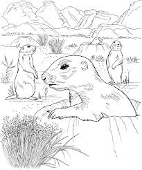 Prairie Dog Grassland Biome Coloring Pages Print Coloring