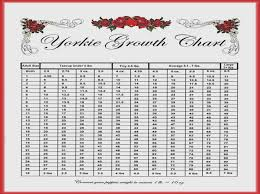 Akita Weight And Growth Chart 17 Photos Of Akita Puppy Weight Chart Petmehome