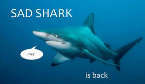great white and teal ugh another san jose sharks blog sad shark is back