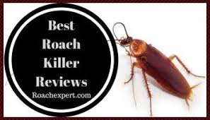 Baby Cockroaches In The Kitchen How To Get Rid Completely