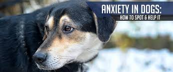 helping dogs with anxiety. Plain With Intended Helping Dogs With Anxiety A