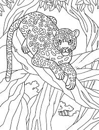 Amur Leopard Coloring Pages At Getdrawingscom Free For Personal