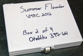 <b>Summer</b> Flounder