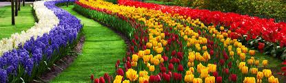 color garden. Flowers Garden Corrugated Color Stripes Website Header