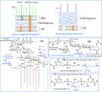 Gramicidin bacterial coverage of cipro